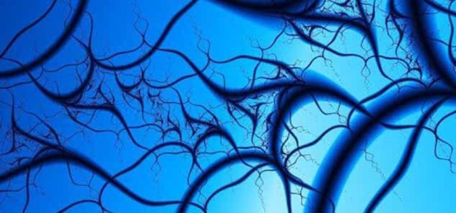 Флебология: заболевания, методы лечения и диагностики