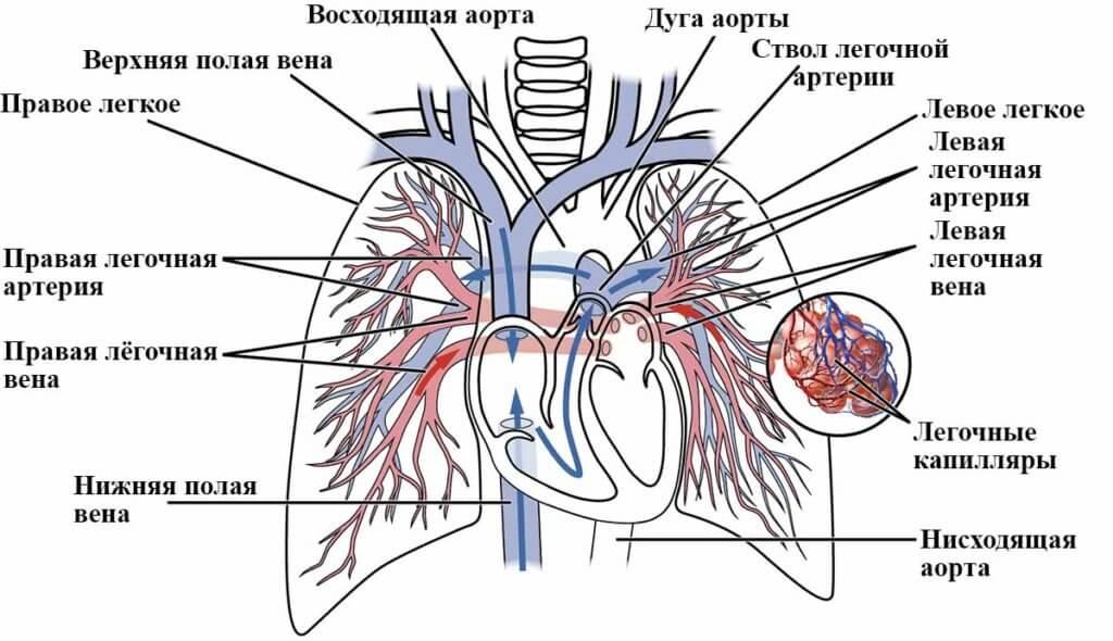 виды тромбоэмболии легочной артерии