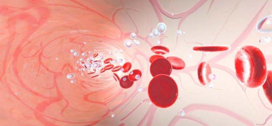 Артерио-венулярные анастомозы — что это такое, их функции и роль в организме