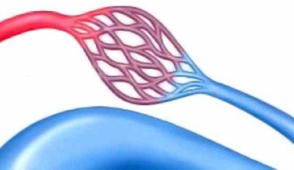 Что такое венулы, их строение и функции в организме