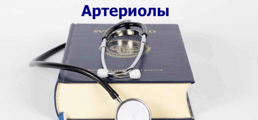 Артериолы: роль в системе кровообращения и регуляции функций организма