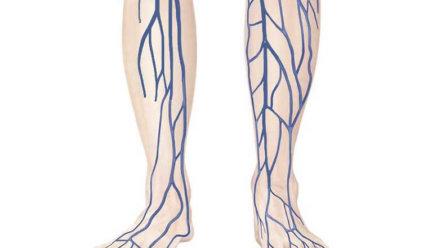 Вены нижних конечностей: функции, строение и заболевания сосудов ног