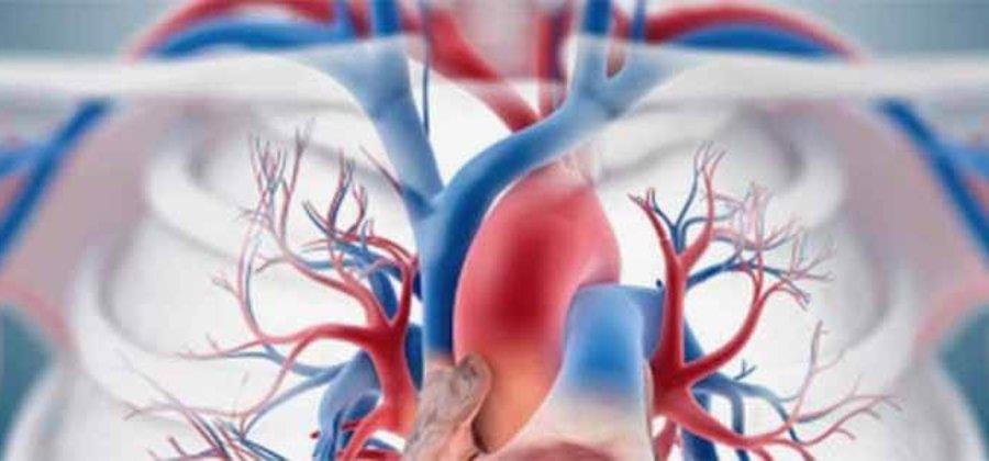 Верхняя полая вена: анатомия и функции сосуда, патологии