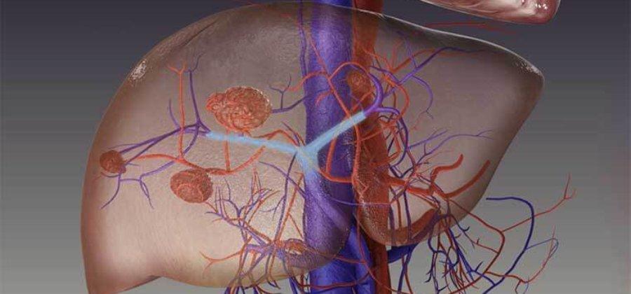 Воротная вена — анатомия сосуда, его функции и заболевания