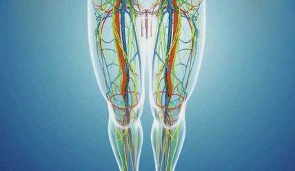 Бедренная вена — анатомия, функции и патологии бедренной вены