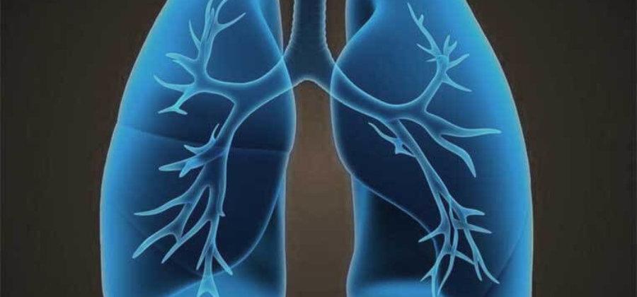 Легочные вены — анатомия и функционирование сосудов, патологии