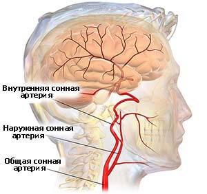 расположение сонный артерий