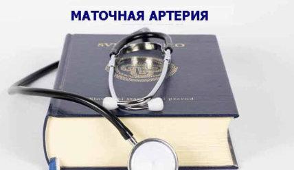 Маточная артерия: строение, функции, допплерометрия