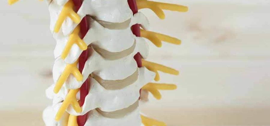 Позвоночная артерия — анатомия, функции и патологии