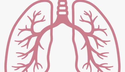 Легочные артерии —  строение, функции и патологии