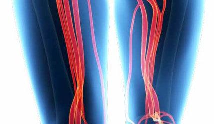 Бедренная артерия: строение и функции, патологии